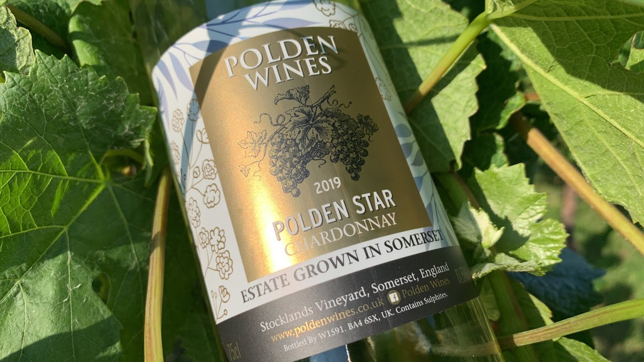 Polden Wines, Somerset - An English Vineyard in Summer