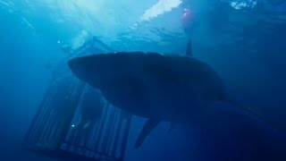 47 Meters Down (Official Trailer #1) HD 2017