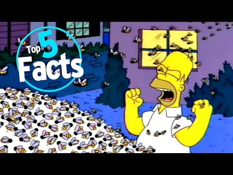 Top 5 Facts about Bees
