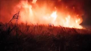 BUSH FIRES AUSTRALIA IS BURNING         IIII    BILLY B