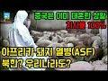 충격적인 아프리카 돼지열병으로 북한 김정은이 깜짝 놀란 이유 [잡식왕]