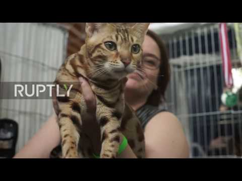 Austria: The world's purr-tiest cats face off in Vienna competition