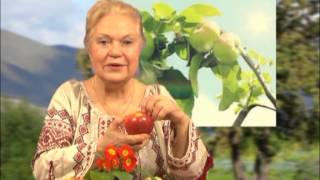 """Наталя Земна - """"ФОРА"""" - Первоцвіт, банан, яблуко та ківі"""