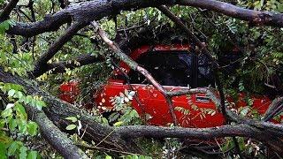 На два автомобиля упало дерево