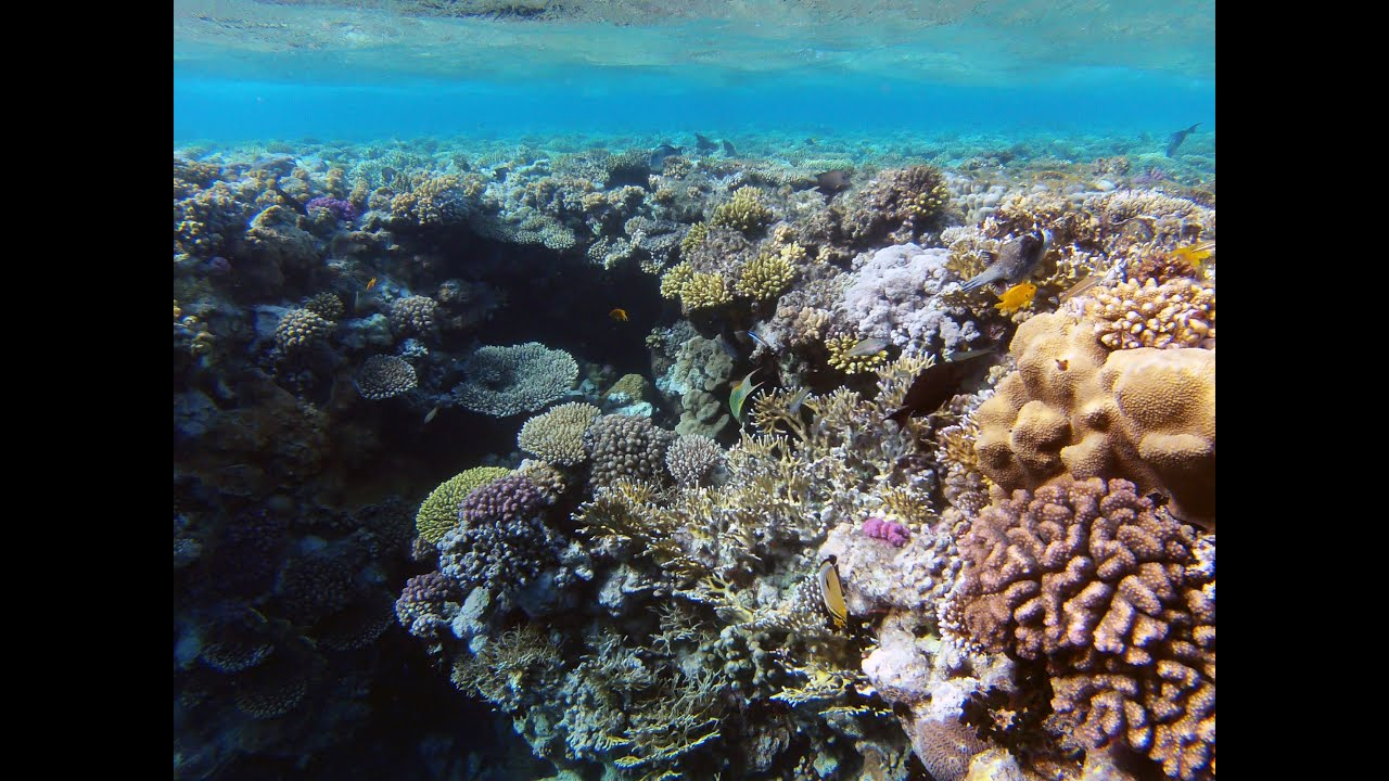 Incredible Snorkeling On Ras Mohammed National Park Sharm