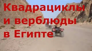 Египет 2018. Покатушки на квадрациклах и верблюдах по пустыне