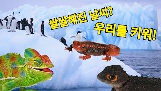 겨울에 키우기 좋은 파충류가 있다?