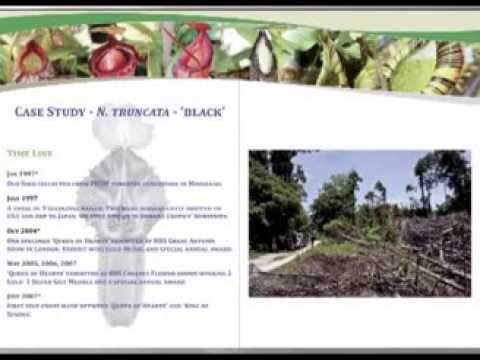 2010 ICPS conference lecture, Robert Cantley on Nepenthes co