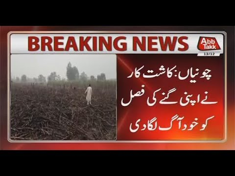 Farmer Torch Sugarcane Field In Chunian - 13th December 2017