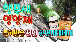 앵무새 키우기[프리락토스]천연 항생제 대체제로 앵무새 …