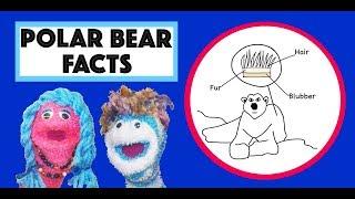 Polar Bear Song   Learn about the Polar Bear   Arctic Animals for Kids   Storytime Annie & Rocco