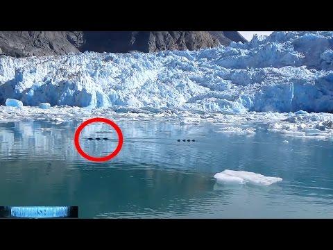HUGE!!! Dragon SEA Serpent MONSTER Captured on VIDEO HD Alaska! UFO Eye Witness!! 11/19/2016