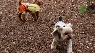 モンちゃんは他の犬と遊ぶのが大嫌い。 だからドッグランに行っても私の...