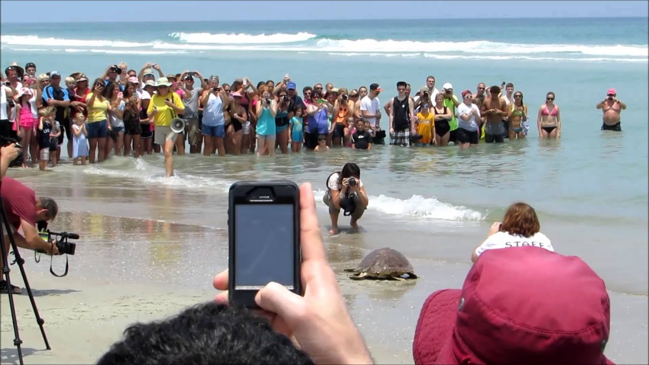 Marine Science Center Ponce Inlet Sea Turtle Release
