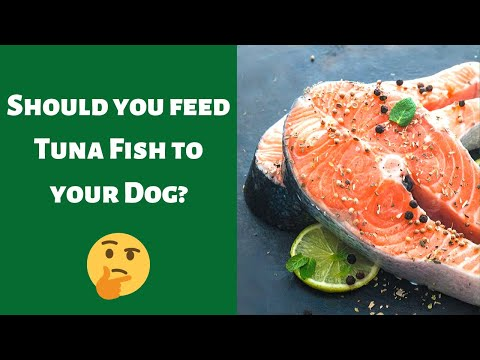 Can Dogs Eat Tuna Fish? Is It Good For Them To Eat Tuna?