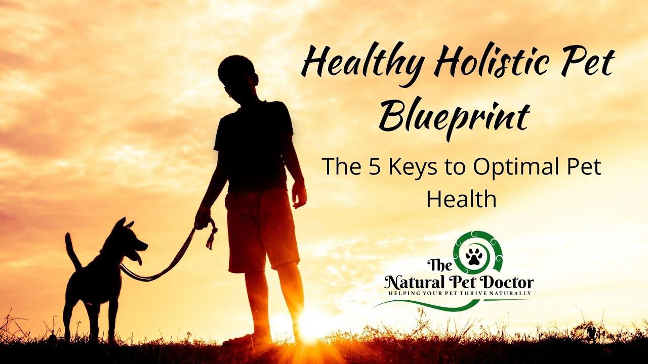 Healthy Holistic Pet Blueprint Masterclass with Dr. Katie Woodley