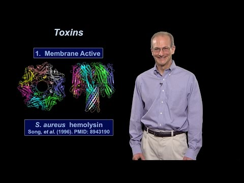 Ralph Isberg (Tufts U / HHMI) Part 1: What Distinguishes a Pathogen from a Non-Pathogen?