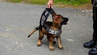 Polizeihunde im Dienst - So behilflich sind Hunde geworden! - DOKUMENTATION 2016 HD *NEU*