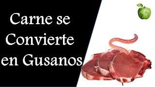 La Carne se Convierte en Gusanos