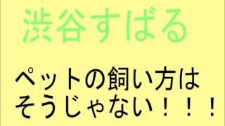 渋谷すばる・こんなペットの飼い方をする人は嫌だ!!! スバラジ 関ジ...