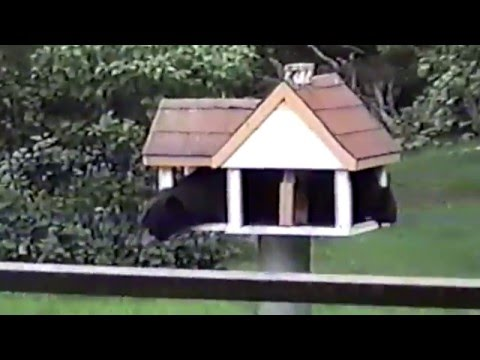 10 Minutes of Backyard Animals