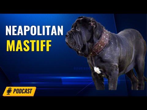 Episode 40: Neapolitan Mastiff - Isiah Massenburg from River City Mastinos