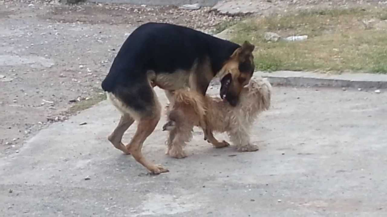 dogsex