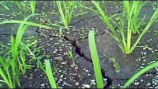 SRI 2012 - PHILIPPINES