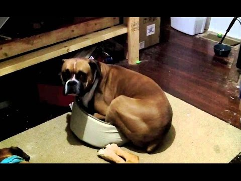 'Big Dogs - Small Beds Compilation' || CFS