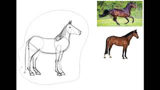 Drawing with Mr  M  Horses and Unicorns