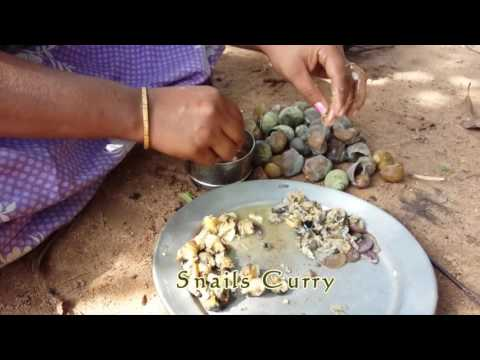 Village Food Factory - Snails Cooking | How to Cook Snail Curry in Village Style