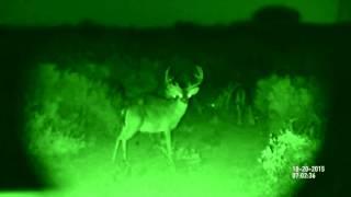 Олени в ночное время | Режим ночного видения ATN BinoX-HD