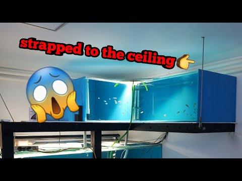 7ft aquarium hanging from the roof!!!