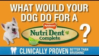 what would your dog do for a nutri dent