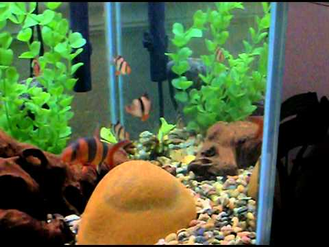 125 gallon freshwater community tank 32 fish youtube for Fish and pets unlimited