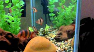 125 Gallon Freshwater Community Tank 32 Fish