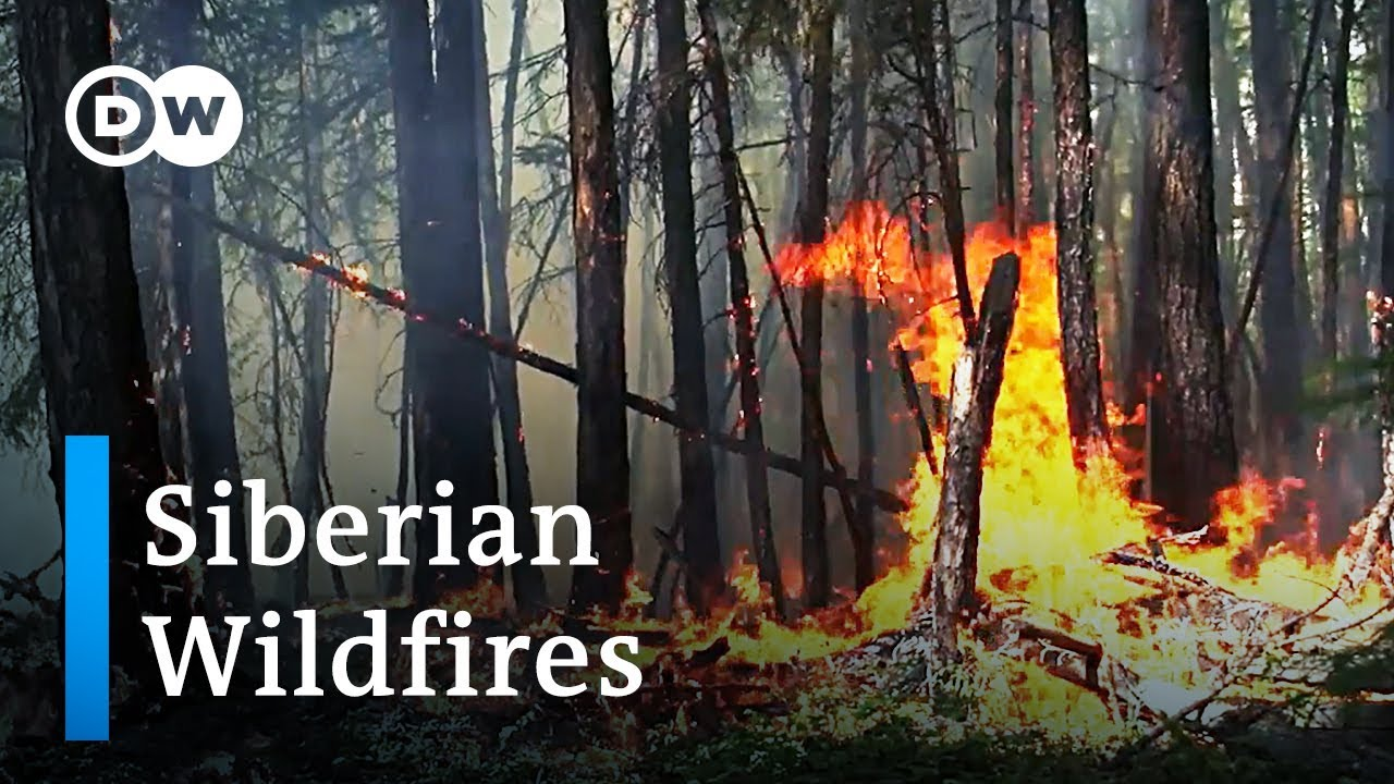 (RUSSIA - August 2019) Wildfires in Russia: A climate catastrophe | DW News