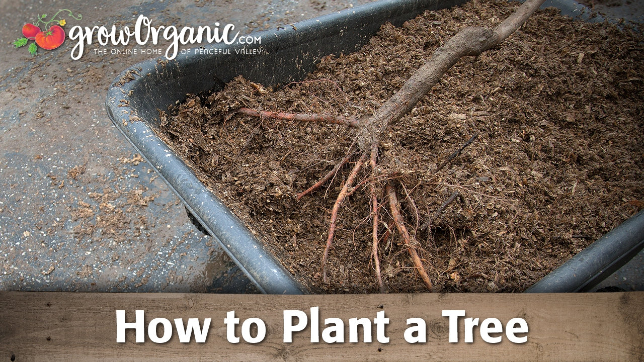 how to start planting career