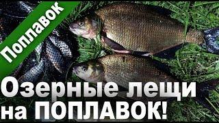 ЛЕЩИ на ПОПЛАВОЧНУЮ удочку! Бонусный ОКУНЯРА)). 2018 г. Рыбалка в 4K Ultra HD