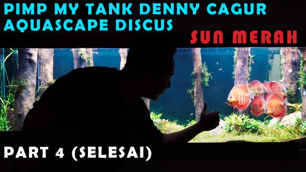 Pmt Season 2 Masukin Ikan Discus Grade A Dari Zora Discus Ke Aquascape Pinus Denny Cagur Youtube