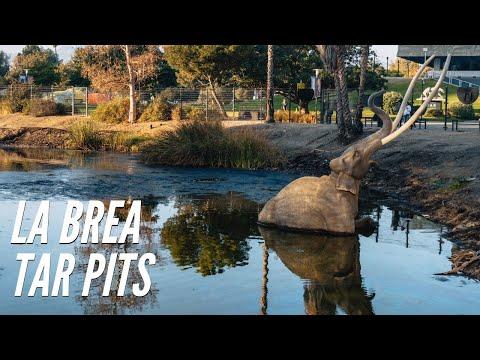 Exploring The La Brea Tar Pits In Los Angeles