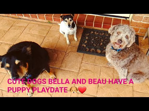 CUTE DOGS BELLA AND BEAU HAVE A PUPPY PLAYDATE! ❤🐶
