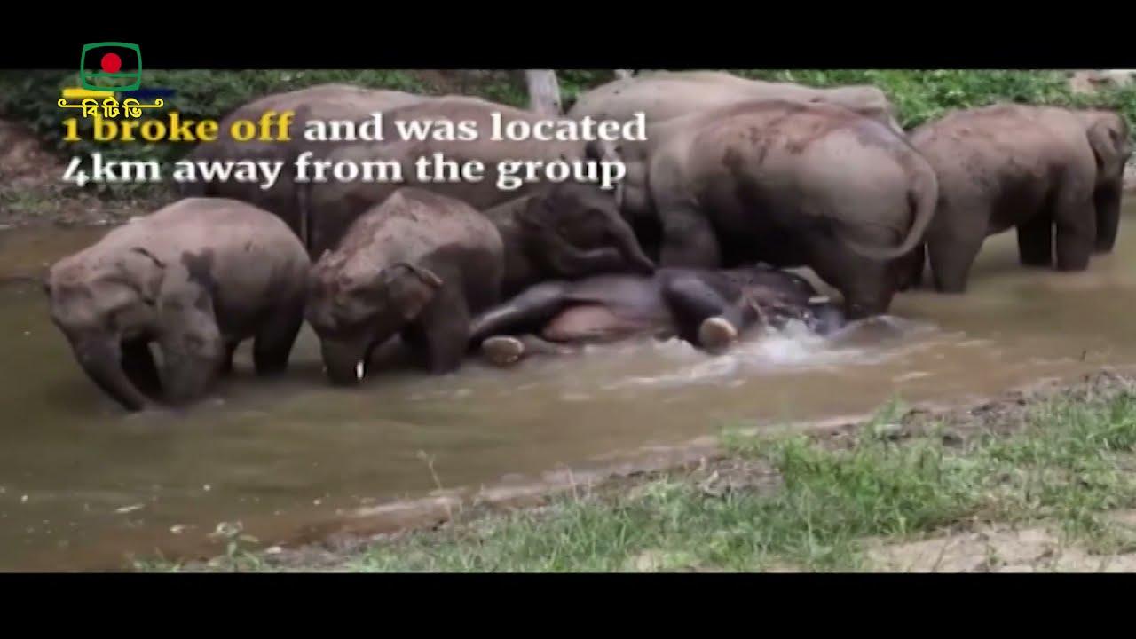 চীনে এশিয় হাতির পালের দীর্ঘ  অভিযাত্রা     Long expedition of Asian elephant herd to China