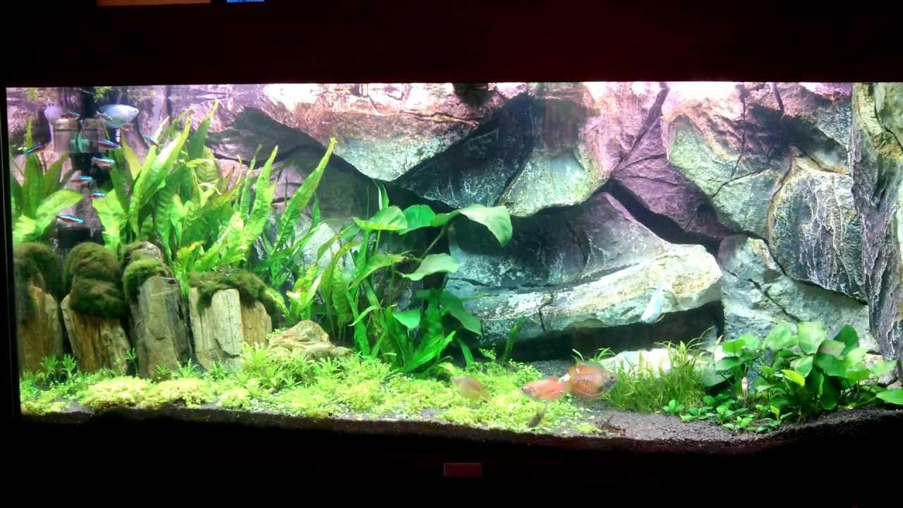 il mio acquario sfondo fatto da aqvadekor youtube