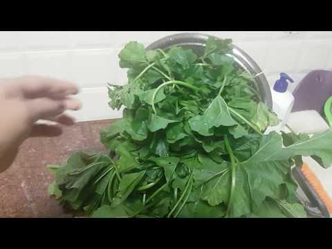 (VLOG):Просвирник,или калачики.Приготовление горячего салата из сорняка калачики.