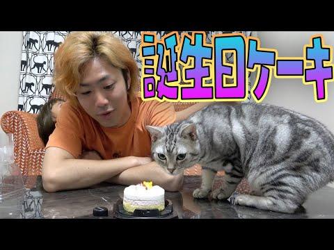 【猫】1歳になった我が子に誕生日サプライズで大喜び!?