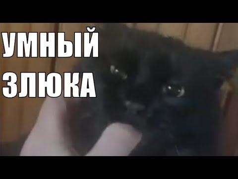 Черный кот Алик умные животные / Black cat smart animals