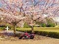 桜並木をツーリング(2014年)‐SA・KU・RA Touring.