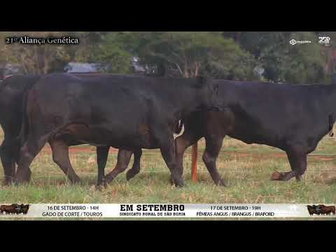 LOTE 062