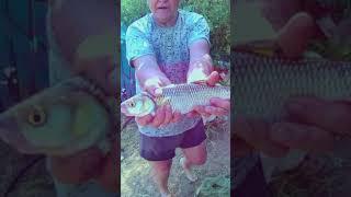 Как правильно измерить рыбу shorts